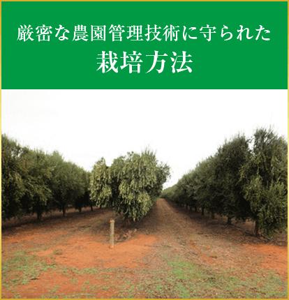 厳密な農園管理技術に守られた栽培方法