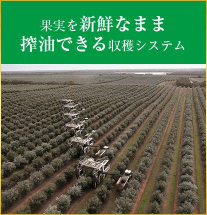 果実を新鮮なまま搾油できる収穫システム